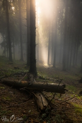 Fotografie - Octav Petru