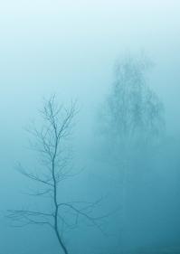Fotografie de natura si landscape - Adi Tataru