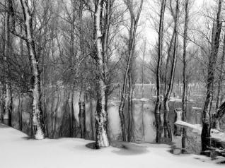"""White forest"" Dunărea Veche 2011"