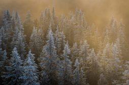 Pădure scăldată de razele soarelui