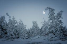 Pădure înghețată