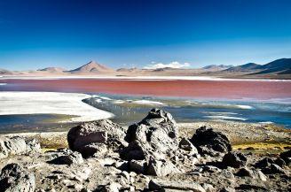 Bolivia - Camelia Lica