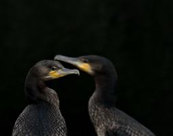 Păsări - Delta Dunării - Mihai Baciu