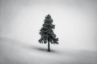 Fotografie - Zsolt András Szabó