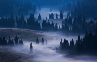 Fotografie - Cosmin Stan - fotograf de natură