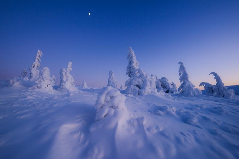 Fotografie natura - Lucian Satmarean