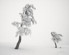 Fotografie - Serban Simbotelecan