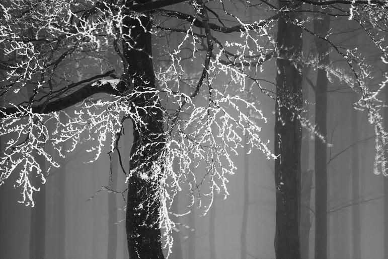 Zsolt Simay - fotografie