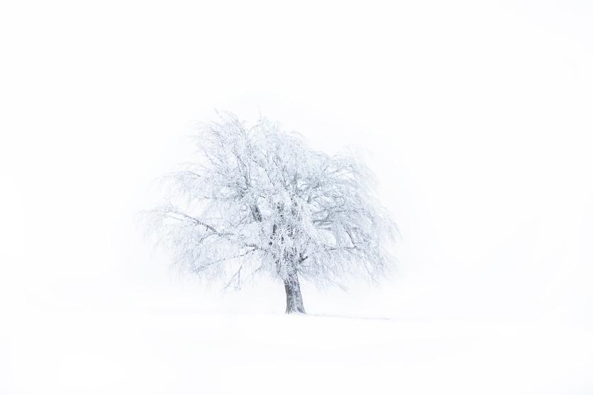My tree - Dan Dragoș