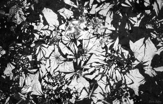 Dorin Bofan - fotografie natura