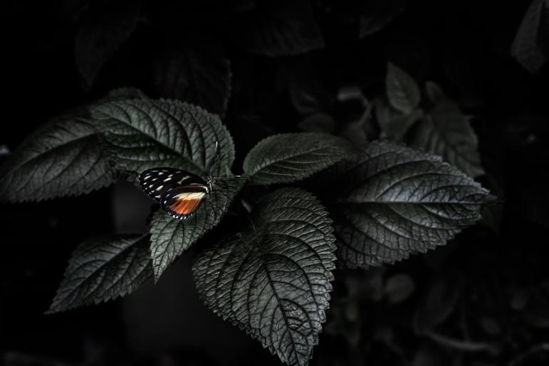 samuel Feron_Series Butterflies_Butterfly4