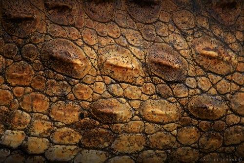 armura-crocodilului