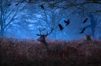 cerb in zori