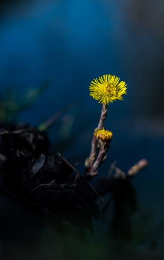 Floare măiastră!