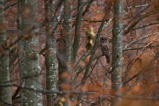 09SM7668-Fotograf wildlife Silviu Matei