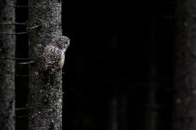 Fotograf wildlife Silviu Matei